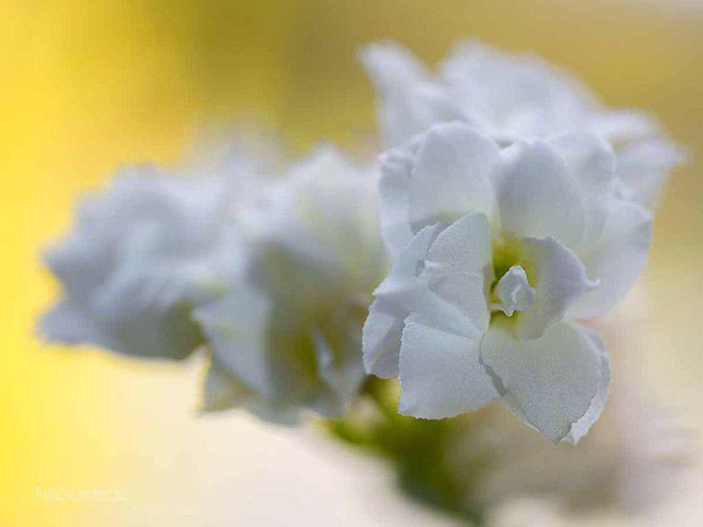 Flowers 2015 01