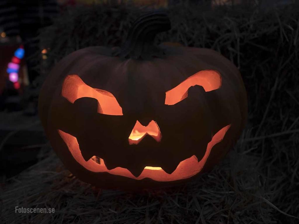 Halloween 2015 08
